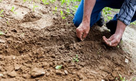 Haveliv: 3 afgrøder du bør overveje at dyrke